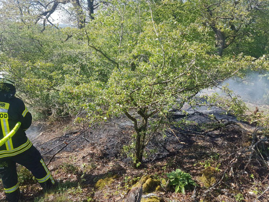 Brennender Baum/Busch